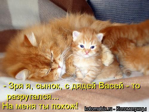 Котоматрица: - Зря я, сынок, с дядей Васей - то разругался... На меня ты похож!