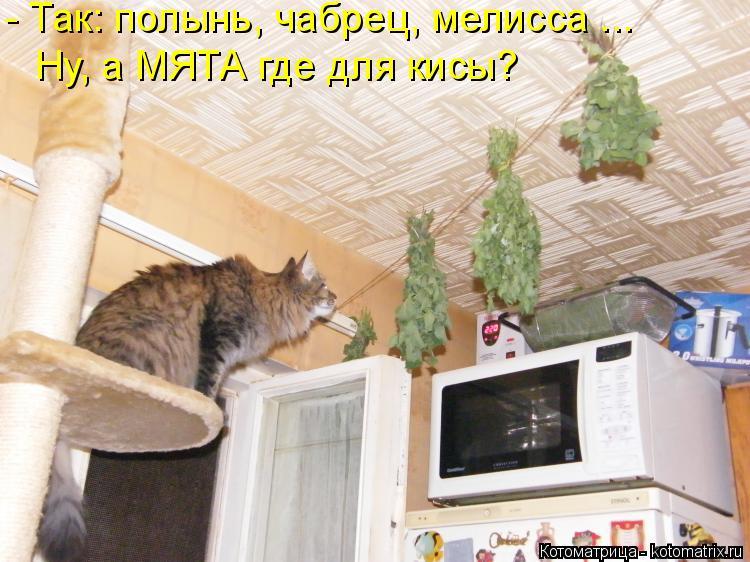 Котоматрица: - Так: полынь, чабрец, мелисса ... Ну, а МЯТА где для кисы?