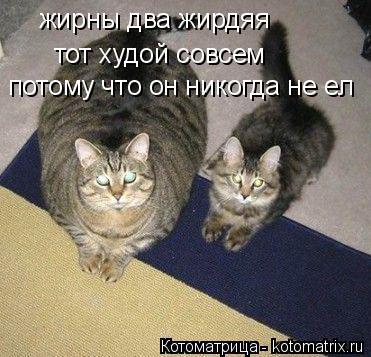 Котоматрица: жирны два жирдяя тот худой совсем потому что он никогда не ел