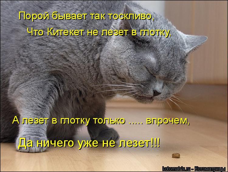 Котоматрица: Порой бывает так тоскливо, Что Китекет не лезет в глотку, А лезет в глотку только ..... впрочем, Да ничего уже не лезет!!!