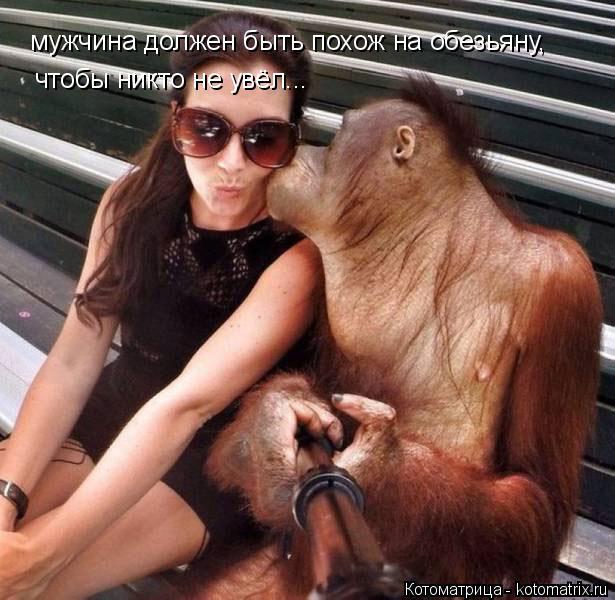 Котоматрица: мужчина должен быть похож на обезьяну, чтобы никто не увёл...