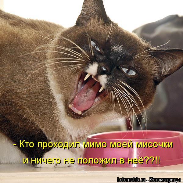 Котоматрица: - Кто проходил мимо моей мисочки и ничего не положил в неё??!!