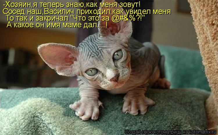 """Котоматрица: -Хозяин,я теперь знаю,как меня зовут! Сосед наш,Василич приходил,как увидел меня То так и закричал """"Что это за @#&%?!"""" А какое он имя маме дал....!"""