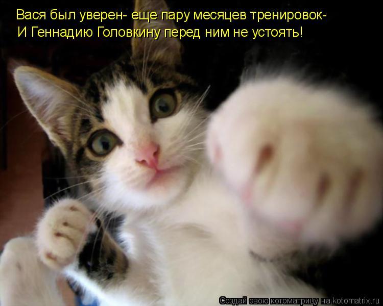 Котоматрица: Вася был уверен- еще пару месяцев тренировок- И Геннадию Головкину перед ним не устоять!