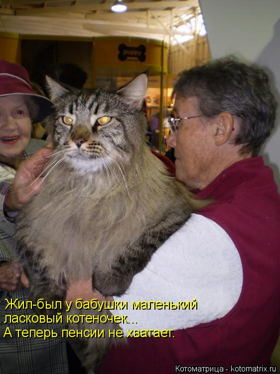 Котоматрица: Жил-был у бабушки маленький ласковый котеночек... А теперь пенсии не хватает.