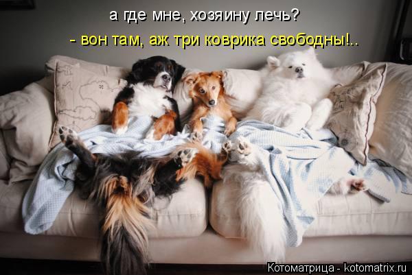 Котоматрица: а где мне, хозяину лечь?  - вон там, аж три коврика свободны!..