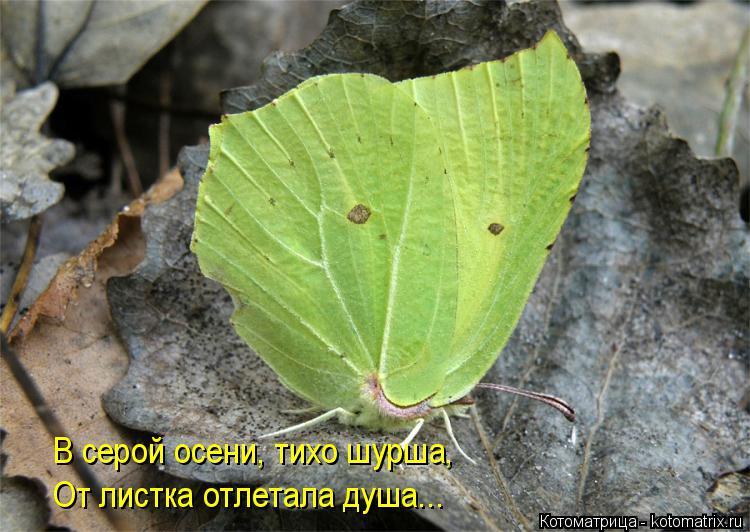 Котоматрица: В серой осени, тихо шурша, От листка отлетала душа...