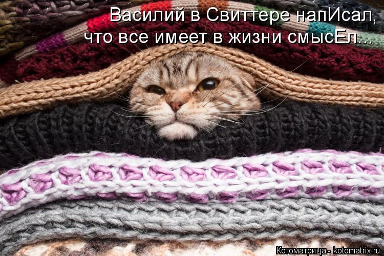 Котоматрица: Василий в Свиттере напИсал, что все имеет в жизни смысЕл...