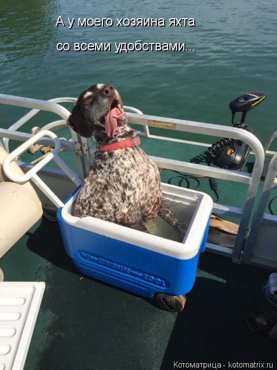Котоматрица: А у моего хозяина яхта  со всеми удобствами...