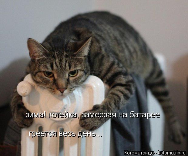 Котоматрица: зима! котейка, замерзая,на батарее  греется весь день...