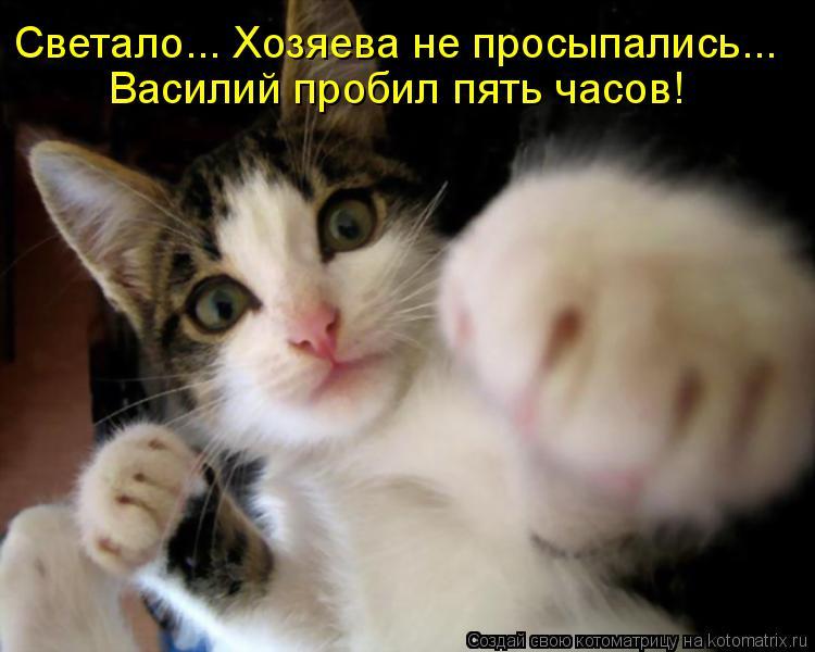 Котоматрица: Светало... Хозяева не просыпались... Василий пробил пять часов!