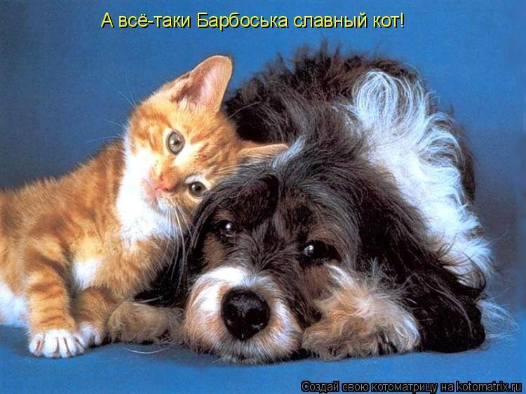 Котоматрица: А всё-таки Барбоська славный кот!