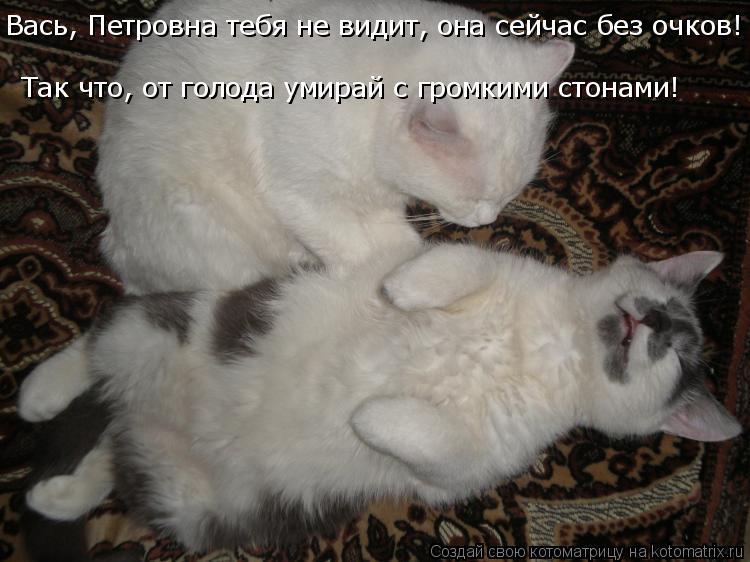 Котоматрица: Вась, Петровна тебя не видит, она сейчас без очков! Так что, от голода умирай с громкими стонами!