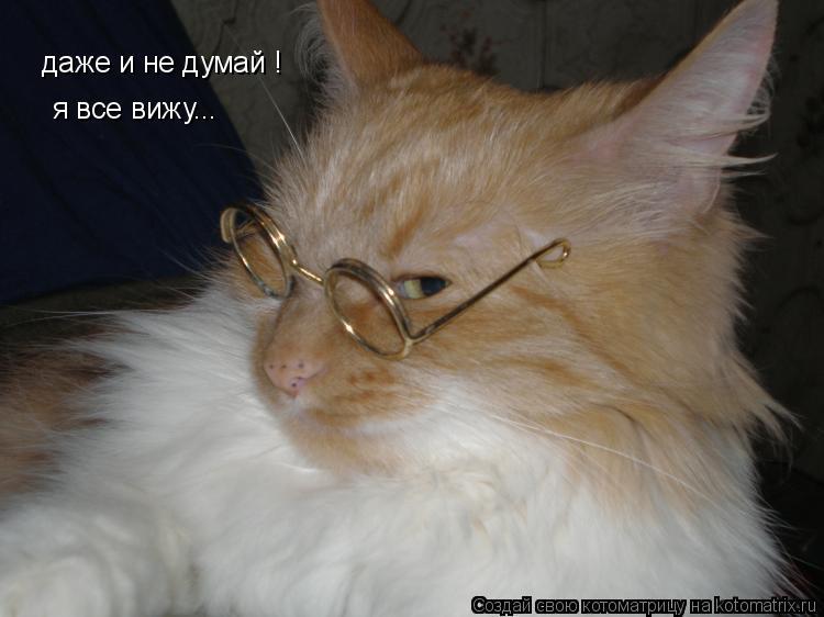 Котоматрица: даже и не думай ! я все вижу...