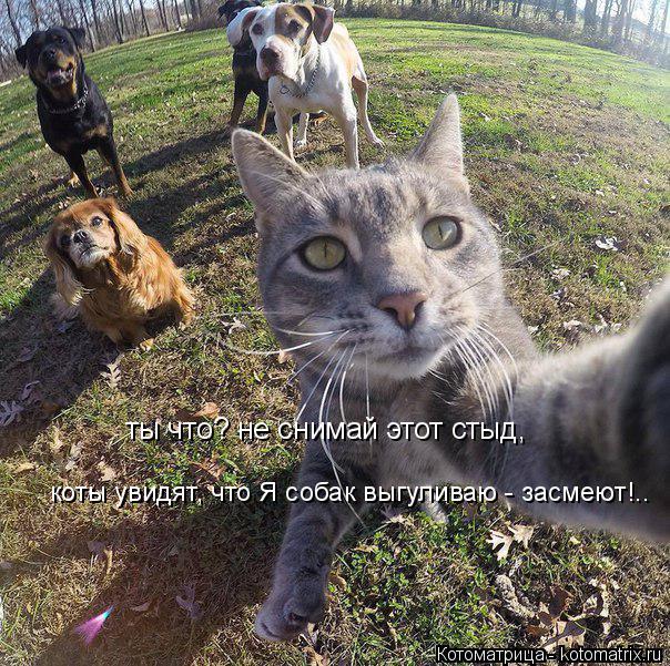 Котоматрица: ты что? не снимай этот стыд, коты увидят, что Я собак выгуливаю - засмеют!..