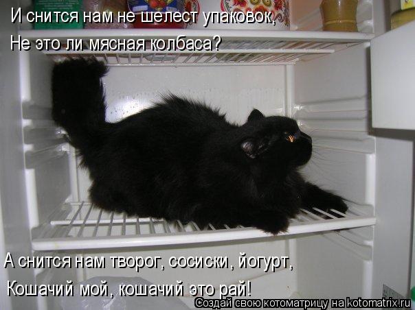Котоматрица: И снится нам не шелест упаковок, Не это ли мясная колбаса? А снится нам творог, сосиски, йогурт, Кошачий мой, кошачий это рай!