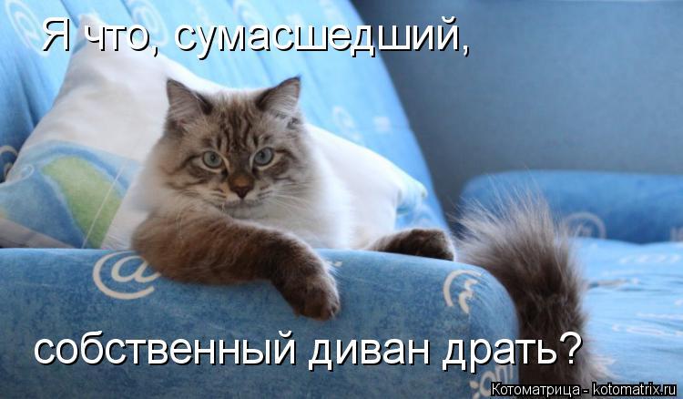 Котоматрица: собственный диван драть? Я что, сумасшедший,