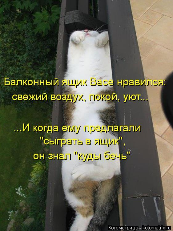 """Котоматрица: Балконный ящик Васе нравился: свежий воздух, покой, уют... ...И когда ему предлагали """"сыграть в ящик"""", он знал """"куды бечь"""""""
