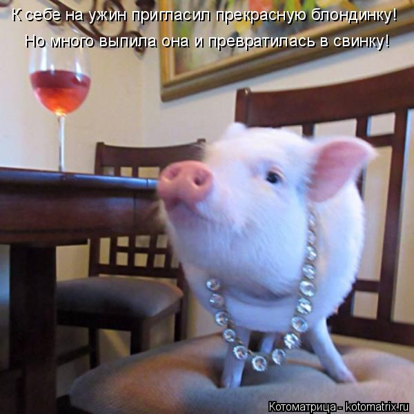 Котоматрица: К себе на ужин пригласил прекрасную блондинку! Но много выпила она и превратилась в свинку!