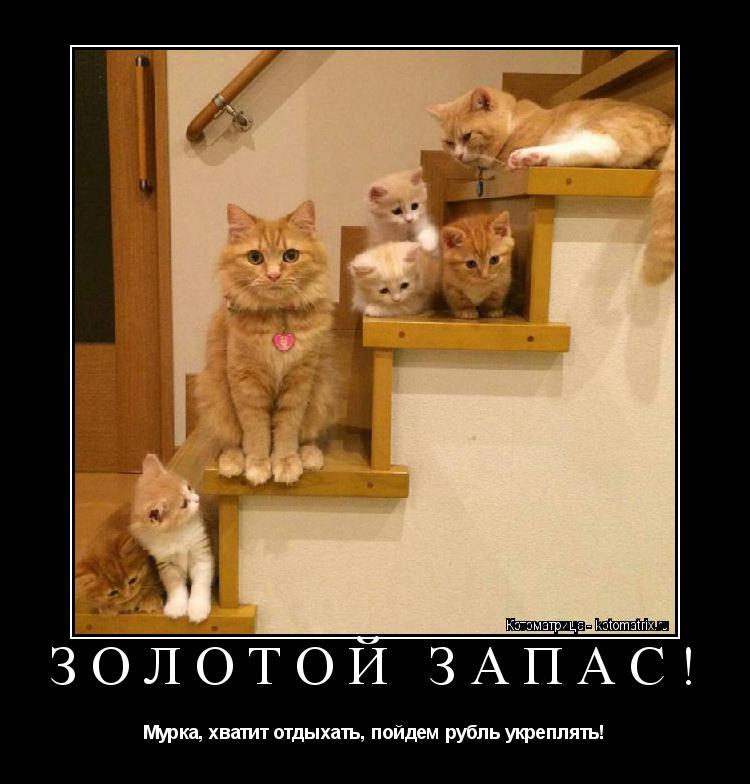 Котоматрица: ЗОЛОТОЙ ЗАПАС! Мурка, хватит отдыхать, пойдем рубль укреплять!