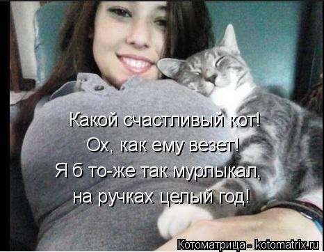 Котоматрица: Какой счастливый кот! Ох, как ему везет! Я б то-же так мурлыкал, на ручках целый год!