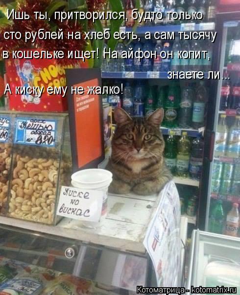 Котоматрица: Ишь ты, притворился, будто только  сто рублей на хлеб есть, а сам тысячу в кошельке ищет! На айфон он копит,  знаете ли... А киску ему не жалко!