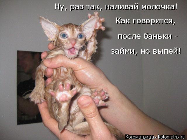 Котоматрица: Ну, раз так, наливай молочка! после баньки -  займи, но выпей! Как говорится,