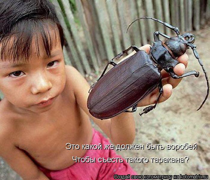 Котоматрица: Это какой же должен быть воробей Чтобы съесть такого таракана?
