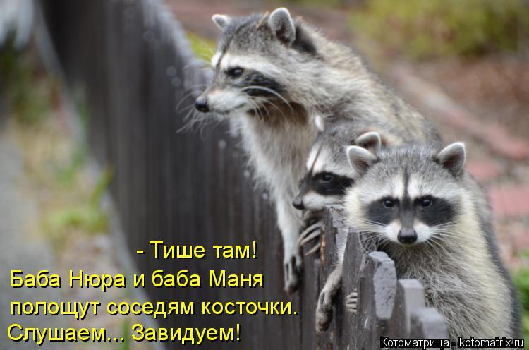 Котоматрица: полощут соседям косточки. Слушаем... Завидуем! Баба Нюра и баба Маня  - Тише там!