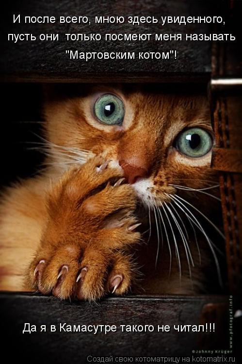 """Котоматрица: И после всего, мною здесь увиденного, пусть они  только посмеют меня называть """"Мартовским котом""""! Да я в Камасутре такого не читал!!!"""