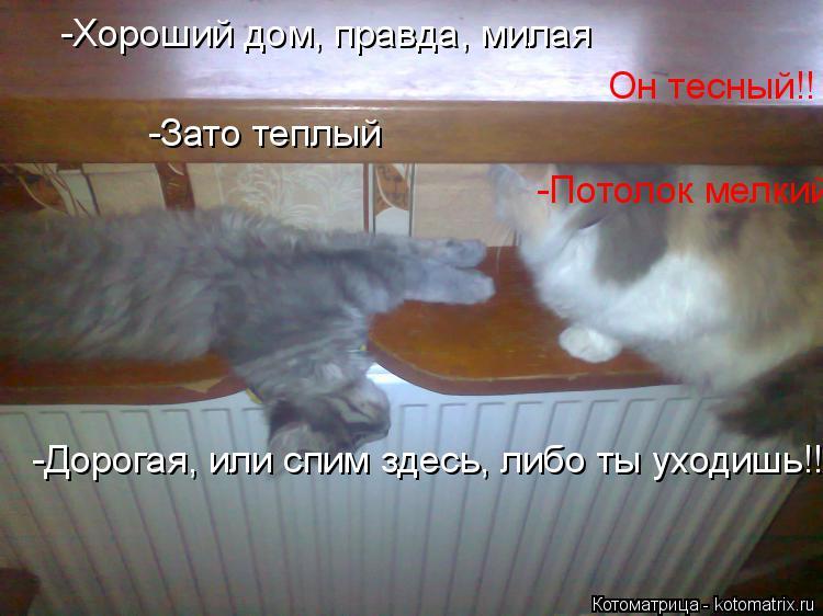Котоматрица: -Хороший дом, правда, милая Он тесный!! -Зато теплый -Потолок мелкий!! -Дорогая, или спим здесь, либо ты уходишь!!!