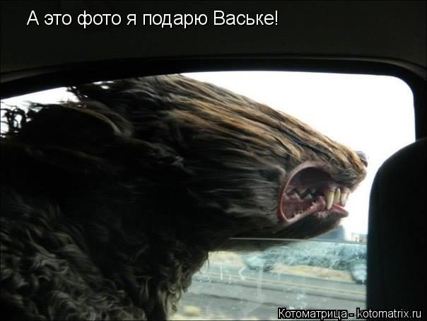 Котоматрица: А это фото я подарю Ваське!