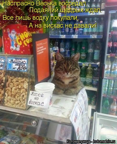 Котоматрица: Наспрасно Васька восседал, Подаяний щедрых ждал. Все лишь водку покупали, А на вискас не давали!