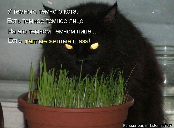 Котоматрица: У темного темного кота... Есть темное темное лицо На его темном темном лице... Есть желтые желтые глаза!