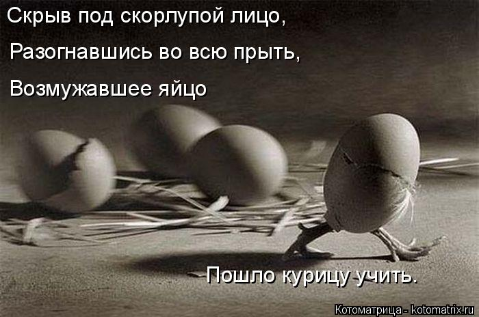Котоматрица: Скрыв под скорлупой лицо, Разогнавшись во всю прыть, Возмужавшее яйцо Пошло курицу учить.