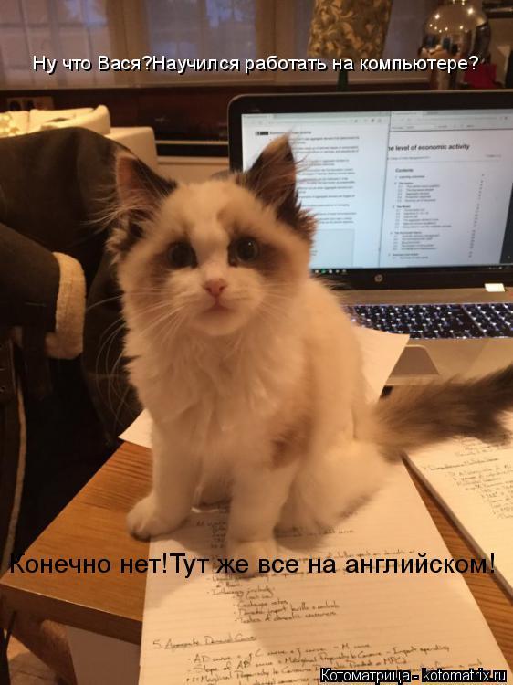 Котоматрица: Ну что Вася?Научился работать на компьютере? Конечно нет!Тут же все на английском!