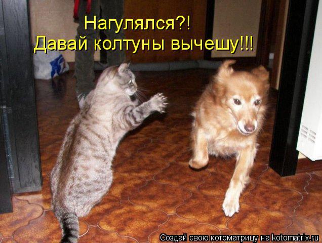 Котоматрица: Давай колтуны вычешу!!! Нагулялся?!