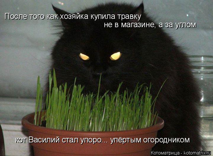 Котоматрица: После того как хозяйка купила травку не в магазине, а за углом кот Василий стал упоро... упёртым огородником