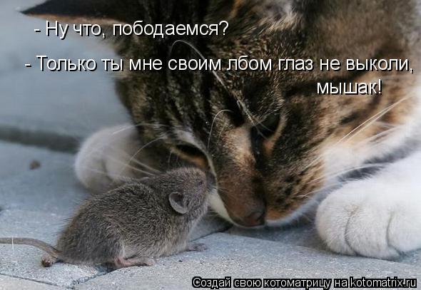 Котоматрица: - Ну что, пободаемся? - Только ты мне своим лбом глаз не выколи, мышак!