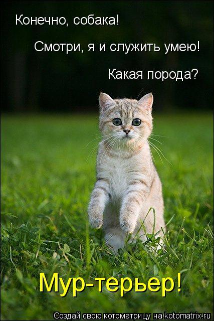 Котоматрица: Конечно, собака! Смотри, я и служить умею! Какая порода? Мур-терьер!