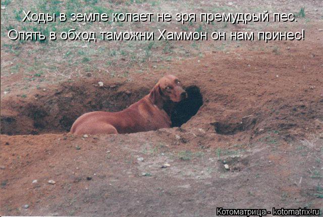 Котоматрица: Ходы в земле копает не зря премудрый пес. Опять в обход таможни Хаммон он нам принес!