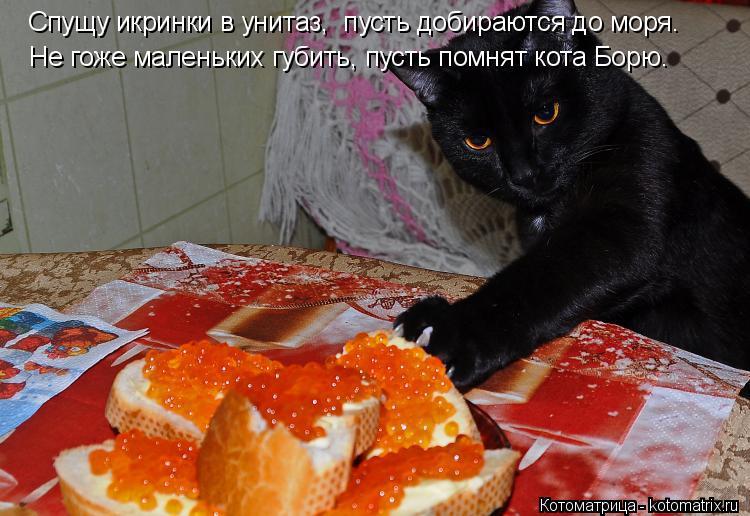 Котоматрица: Спущу икринки в унитаз,  пусть добираются до моря. Не гоже маленьких губить, пусть помнят кота Борю.