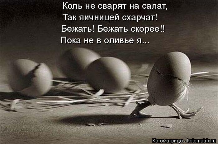 Котоматрица: Коль не сварят на салат, Так яичницей схарчат! Бежать! Бежать скорее!! Пока не в оливье я...