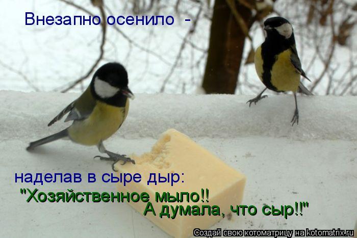 """Котоматрица: Внезапно осенило  - наделав в сыре дыр: """"Хозяйственное мыло!! А думала, что сыр!!"""""""
