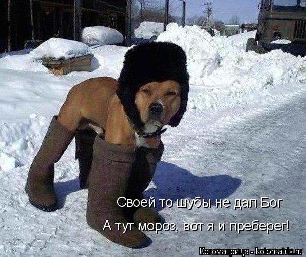 Котоматрица: Своей то шубы не дал Бог А тут мороз, вот я и преберег!