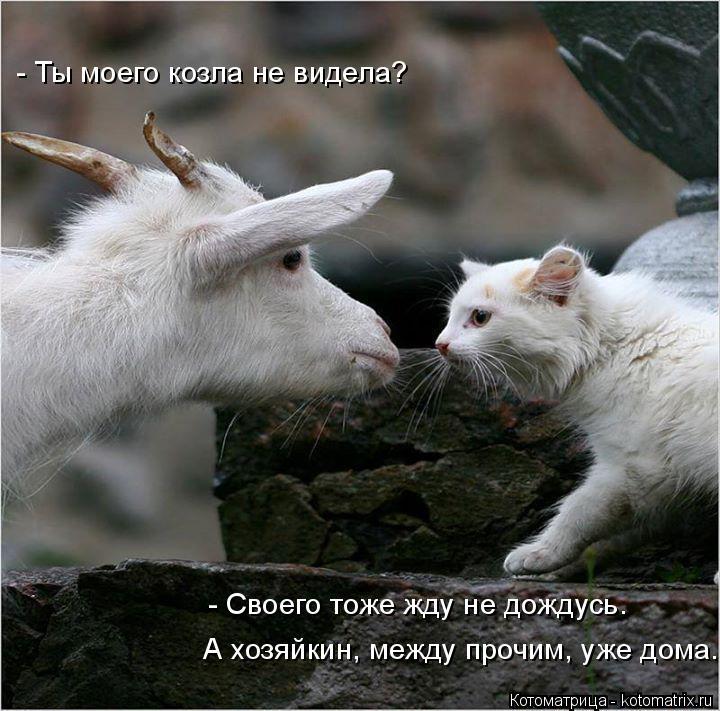 Котоматрица: - Ты моего козла не видела?  А хозяйкин, между прочим, уже дома. - Своего тоже жду не дождусь.