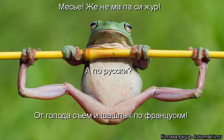 Котоматрица: Месье! Же не ма па си жур! А по русски? От голода съем и шашлык по францускм!