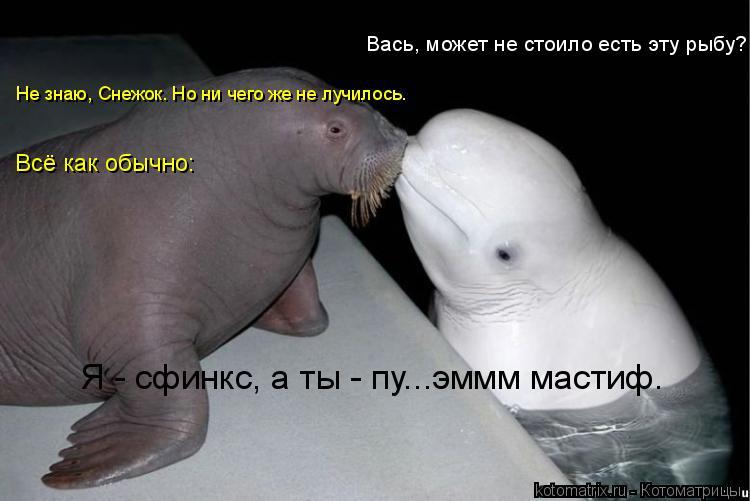 Котоматрица: Вась, может не стоило есть эту рыбу? Не знаю, Снежок. Но ни чего же не лучилось. Всё как обычно: Я - сфинкс, а ты - пу...эммм мастиф.