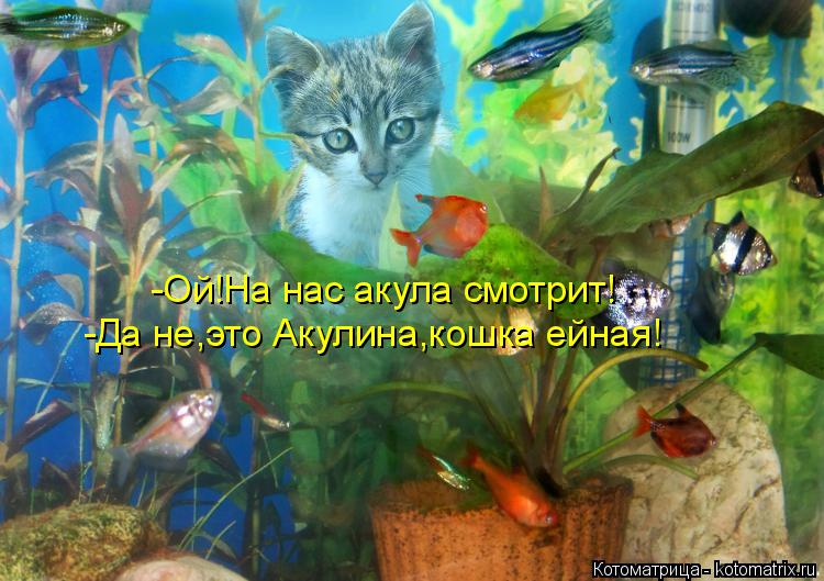Котоматрица: -Ой!На нас акула смотрит! -Да не,это Акулина,кошка ейная!