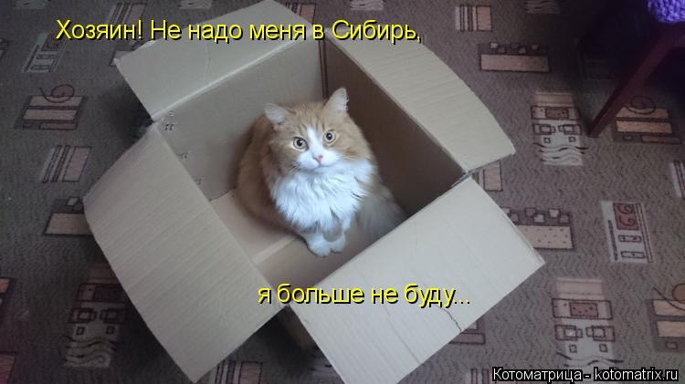Котоматрица: Хозяин! Не надо меня в Сибирь, я больше не буду...